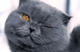 Коты очень красивые и забавные