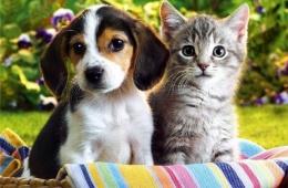 «Кот и пес» - сеть магазинов для животных