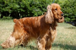 Добродушная собака с характером