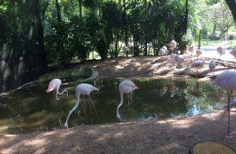 Путешествие по Таиланду: море эмоций, контактный зоопарк, вкусная еда