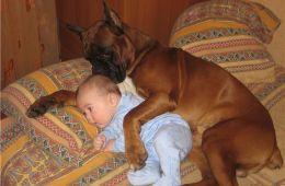 Малыш и Генрих