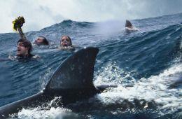 Обычный фильм об акулах? Не совсем так!