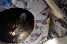 Чем хорош кошкин дом Dogman