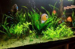 Качественное обслуживание аквариумов