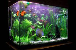 Преображение аквариума в новом офисе