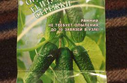 """Как я растила дома огурцы сорт """"Изумрудные сережки""""от агрофирмы ГАВРИШ"""