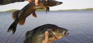 Как получить квоту на вылов рыбы