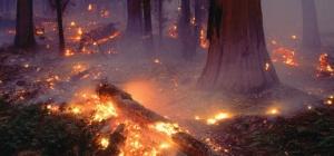Как нарисовать пожар в лесу