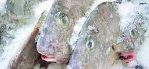 Как приготовить замороженную рыбу