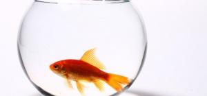 Как слить аквариум