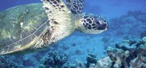 Как кормить водных черепах