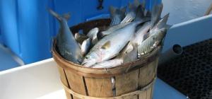 Как сделать рыбный фарш