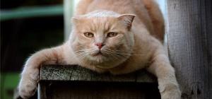 Почему коты метят