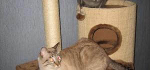 Как сделать кошке домик