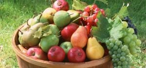 Как вырастить хороший урожай