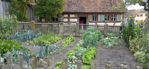 Как выращивать на огороде