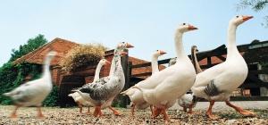 Как открыть ферму