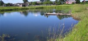 Как сделать пруд для разведения рыбы