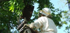 Как сделать ловушки для пчёл