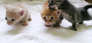 Как удалить запах кошачей мочи