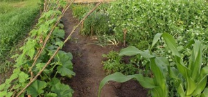 Как удобрить огород