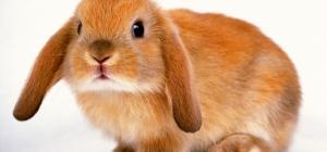 Как стричь когти кролику