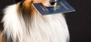 Как сделать родословную щенкам