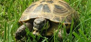 Как мыть черепаху
