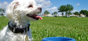 Как варить собаке кашу