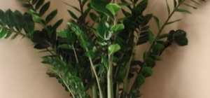 Как узнать название растения