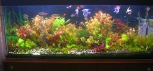 Как продезинфицировать аквариум