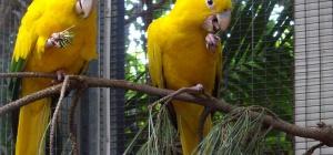 Как лечить понос у попугая