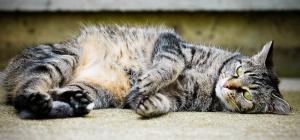 Как приучить кошку к месту