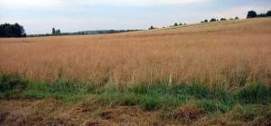 Как переоформить земельный пай