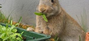 Как начать разводить кроликов
