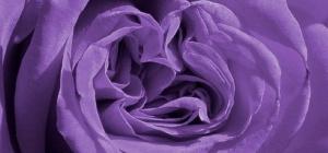 Как смешать фиолетовую краску