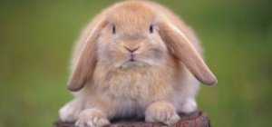 Почему кролик не ест
