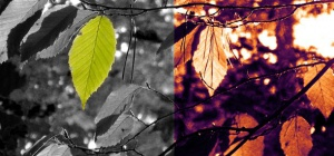 Как сделать из черно-белой фотографии цветную в Photoshop