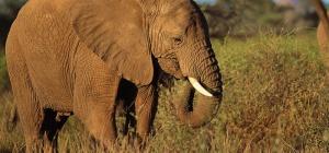 Что такое зоология