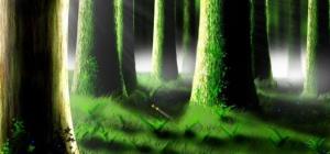 Как определить в лесу стороны света