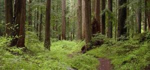 Как оформить в аренду лес