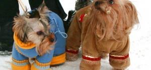 Как сшить комбинезон для маленькой собаки