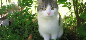 Как отвадить котов от участка