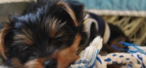 Как сшить сапожки для собаки