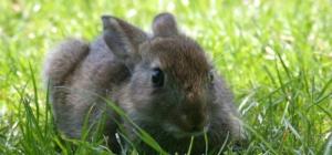 Как распознать пол кролика