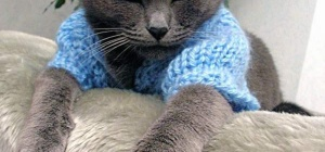 Как связать кофту кошке
