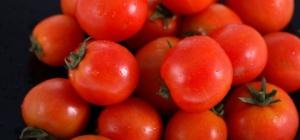 Как выращивать томаты