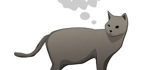 Как узнать, что ваш кот хочет вас убить