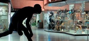 Как попасть в музей бесплатно