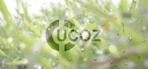 Как на Ucoz поставить баннер